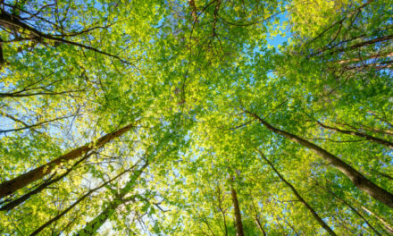 Bureau Veritas urges manufacturers to take heed of net zero pledge required for UK government contracts